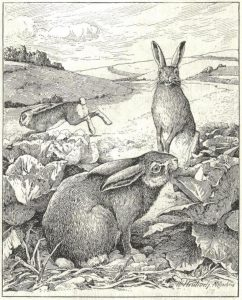 Rabbits can demolish a veggie patch fast! These are actually hares, by the German illustrator, Walter Heubach (1865–1923)