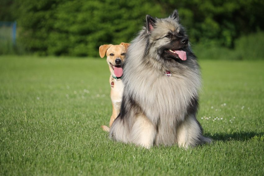 book review: A Broader Understanding of Dogs: Adam Miklosi's Dog Behaviour, Evolution and Cognition